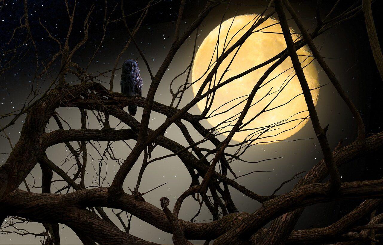 Il Gufo: la Strega della Notte